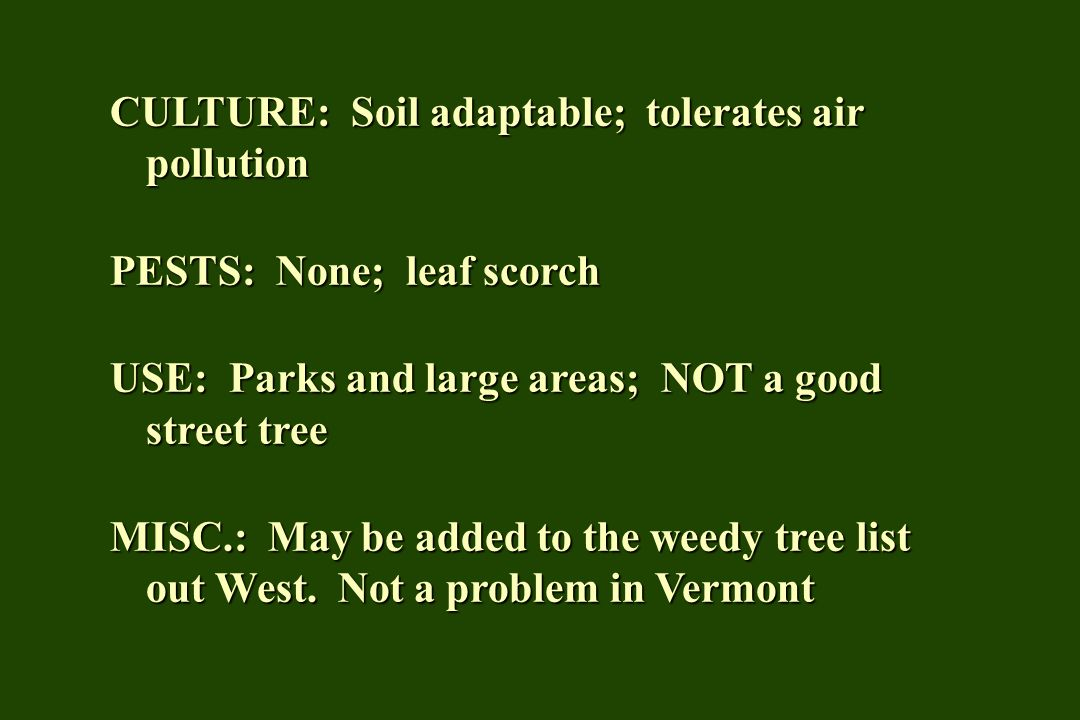 CULTURE: Soil adaptable; tolerates air pollution PESTS: None; leaf scorch USE: Parks and large areas; NOT a good street tree MISC.: May be added to th