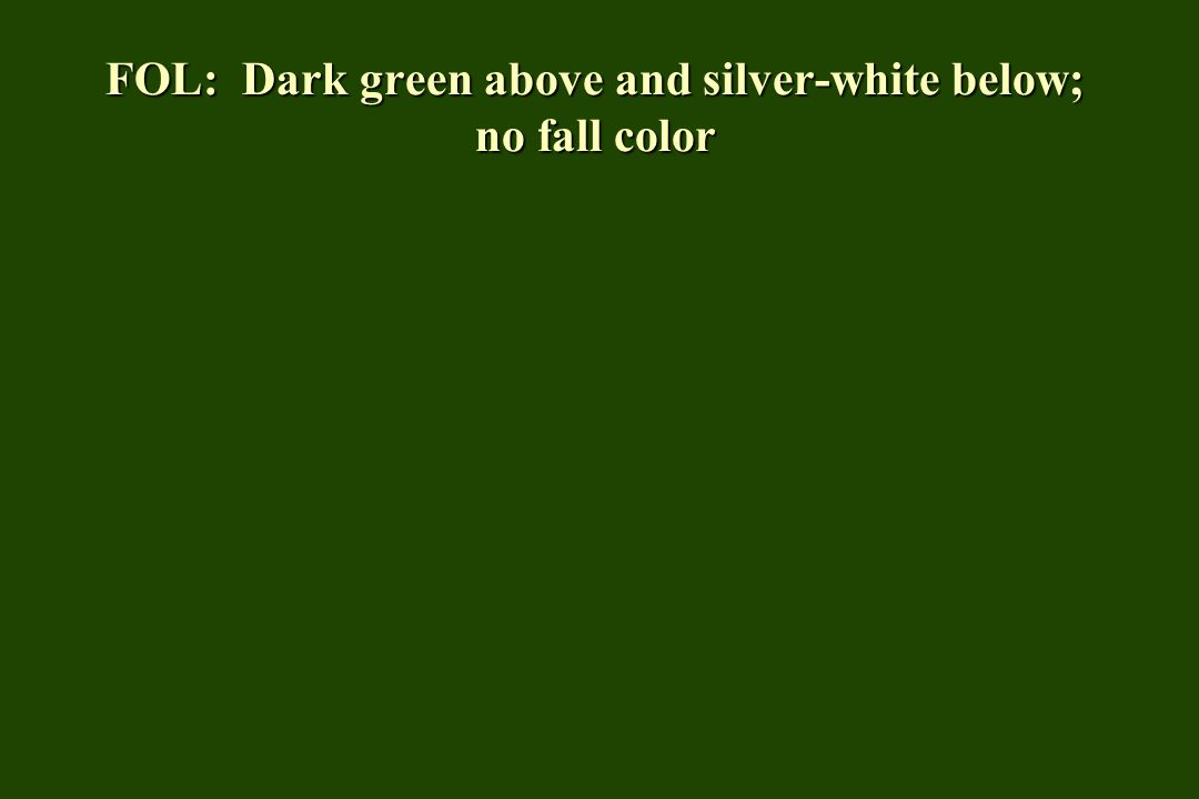 FOL: Dark green above and silver-white below; no fall color