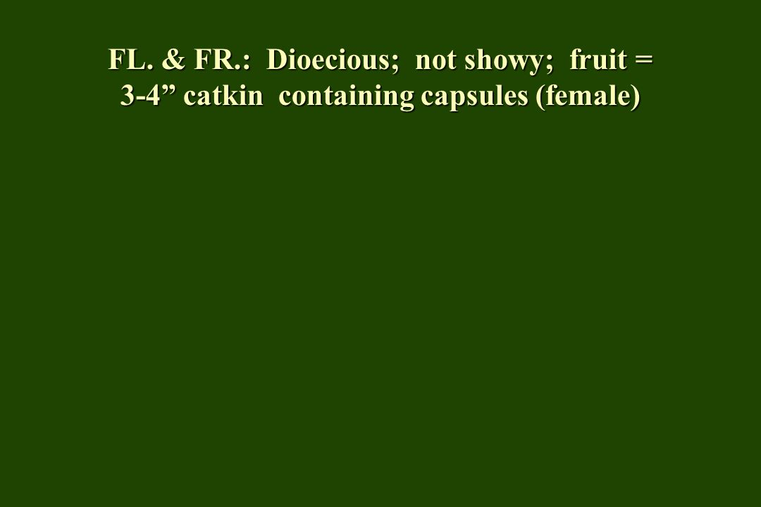 FL. & FR.: Dioecious; not showy; fruit = 3-4 catkin containing capsules (female)