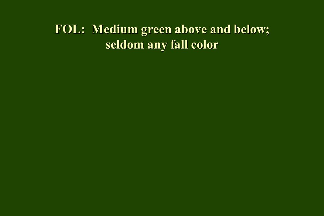 FOL: Medium green above and below; seldom any fall color
