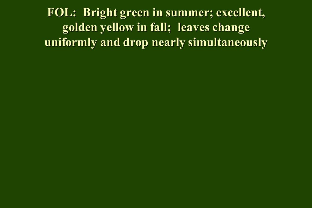 FOL: Bright green in summer; excellent, golden yellow in fall; leaves change uniformly and drop nearly simultaneously