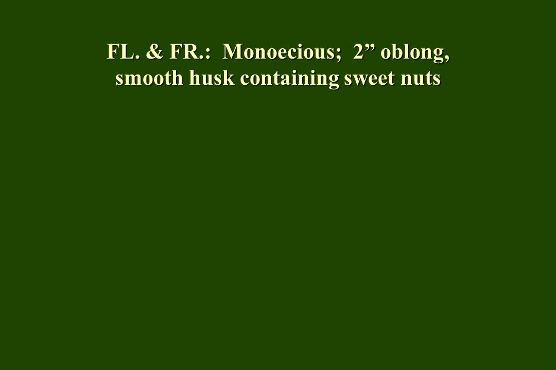 FL. & FR.: Monoecious; 2 oblong, smooth husk containing sweet nuts