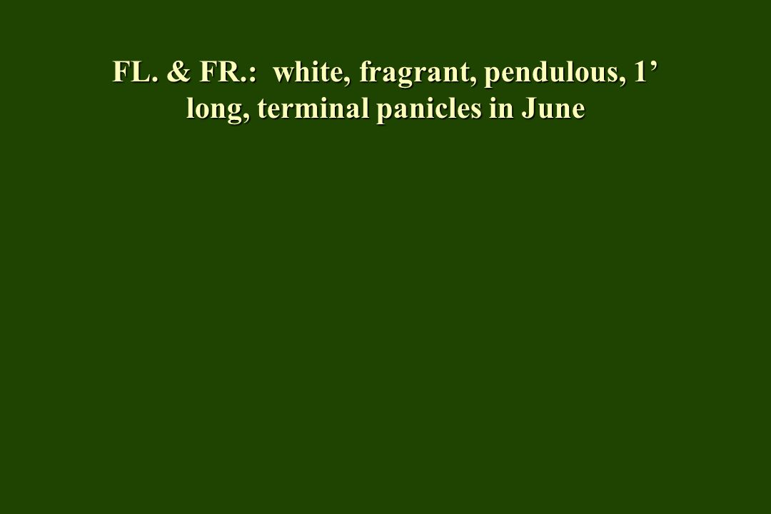 FL. & FR.: white, fragrant, pendulous, 1 long, terminal panicles in June