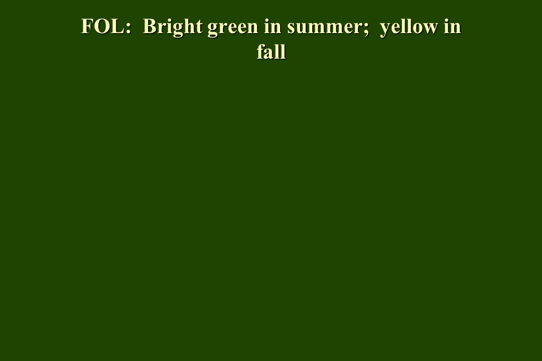FOL: Bright green in summer; yellow in fall