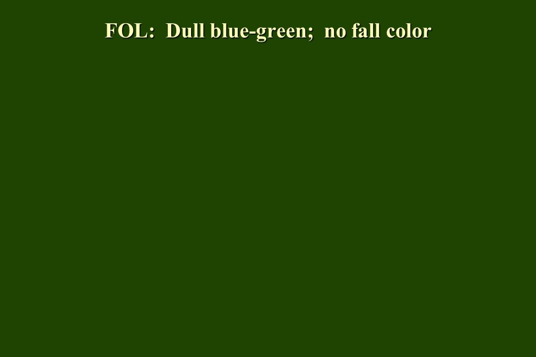 FOL: Dull blue-green; no fall color