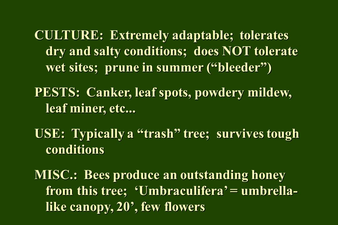 CULTURE: Extremely adaptable; tolerates dry and salty conditions; does NOT tolerate wet sites; prune in summer (bleeder) PESTS: Canker, leaf spots, po
