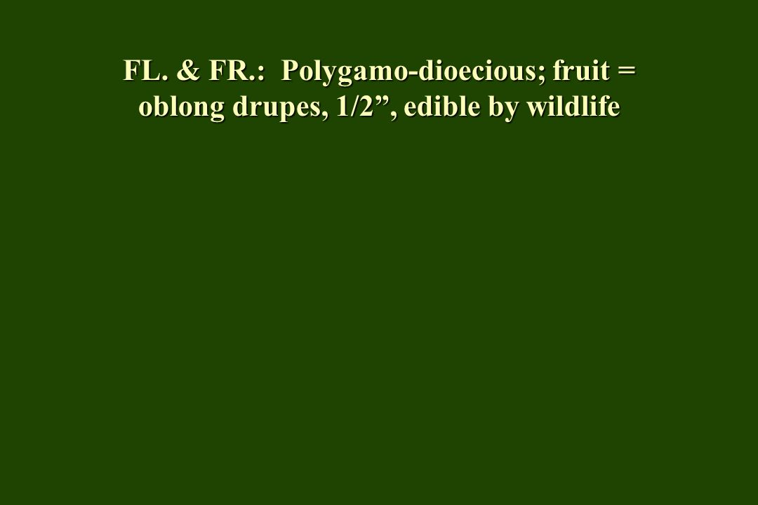 FL. & FR.: Polygamo-dioecious; fruit = oblong drupes, 1/2, edible by wildlife