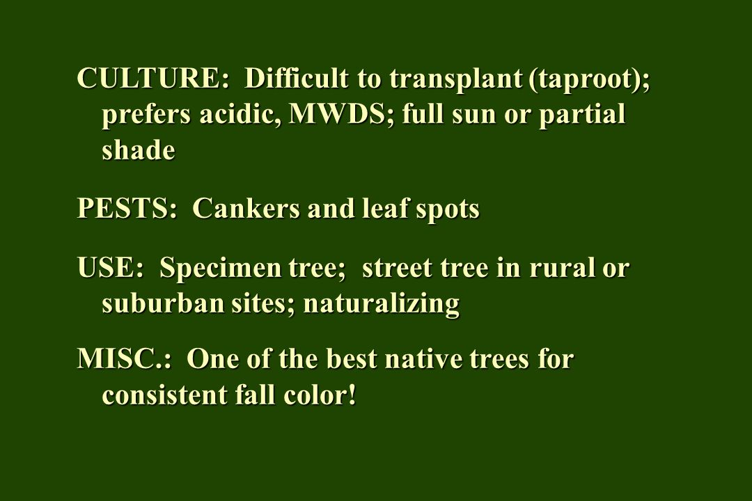 CULTURE: Difficult to transplant (taproot); prefers acidic, MWDS; full sun or partial shade PESTS: Cankers and leaf spots USE: Specimen tree; street t