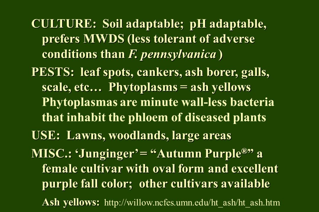 CULTURE: Soil adaptable; pH adaptable, prefers MWDS (less tolerant of adverse conditions than F. pennsylvanica ) PESTS: leaf spots, cankers, ash borer