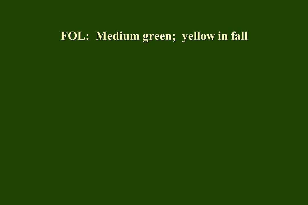 FOL: Medium green; yellow in fall
