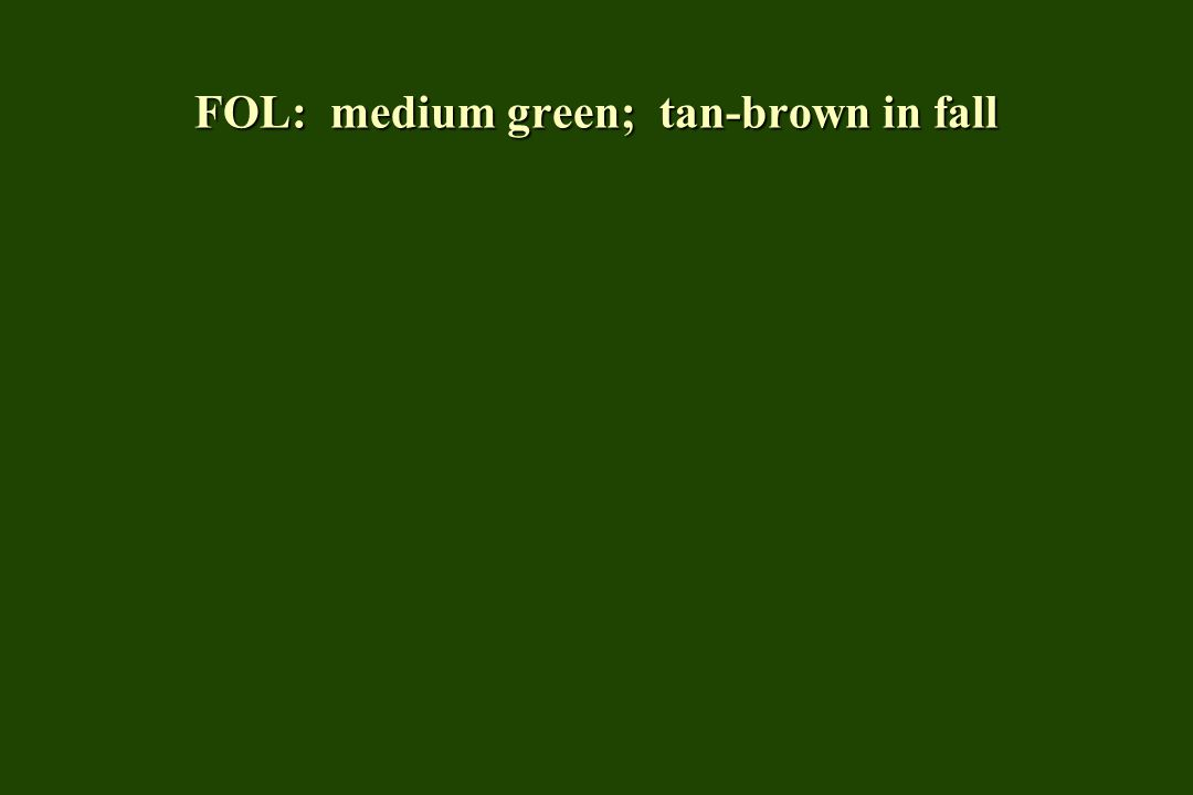 FOL: medium green; tan-brown in fall