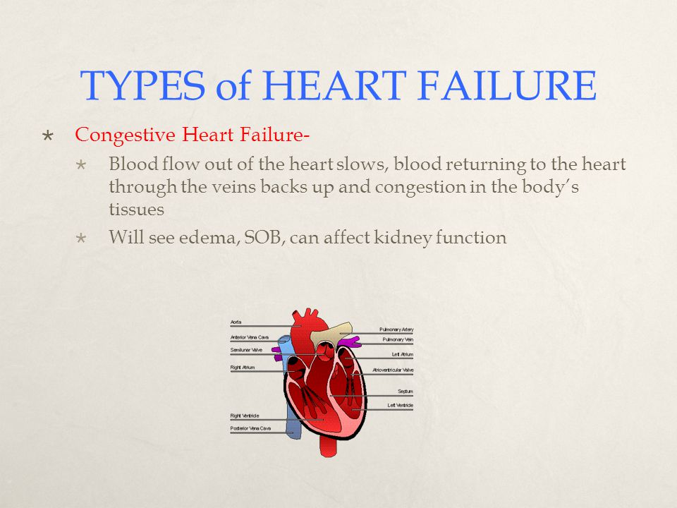 research papers on congestive heart failure Essays - largest database of quality sample essays and research papers on congestive heart failure.