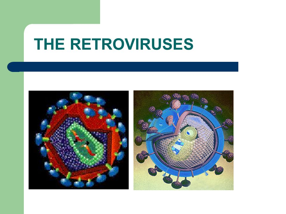THE RETROVIRUSES