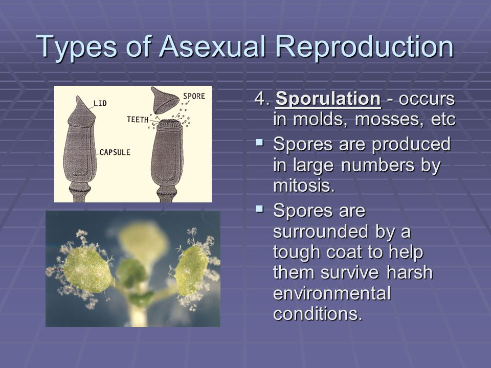 Types of Asexual Reproduction 5.Regeneration - Refers to the replacement or regrowth of lost or damaged body parts