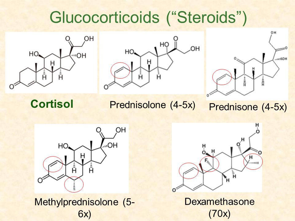 Cortisol Dexamethasone (70x) Decadron® Methylprednisolone (5- 6x) Medrol® Glucocorticoids (Steroids) Prednisolone (4-5x) Prednisone (4-5x)