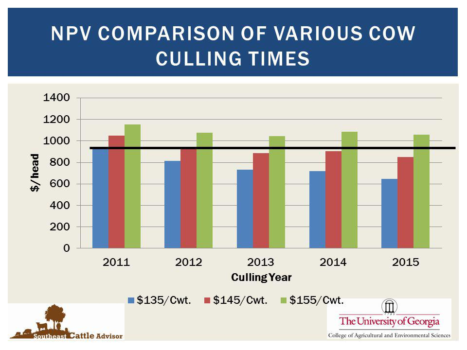 NPV COMPARISON OF VARIOUS COW CULLING TIMES