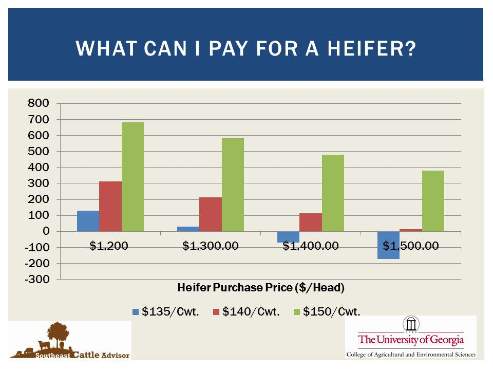 WHAT CAN I PAY FOR A HEIFER?