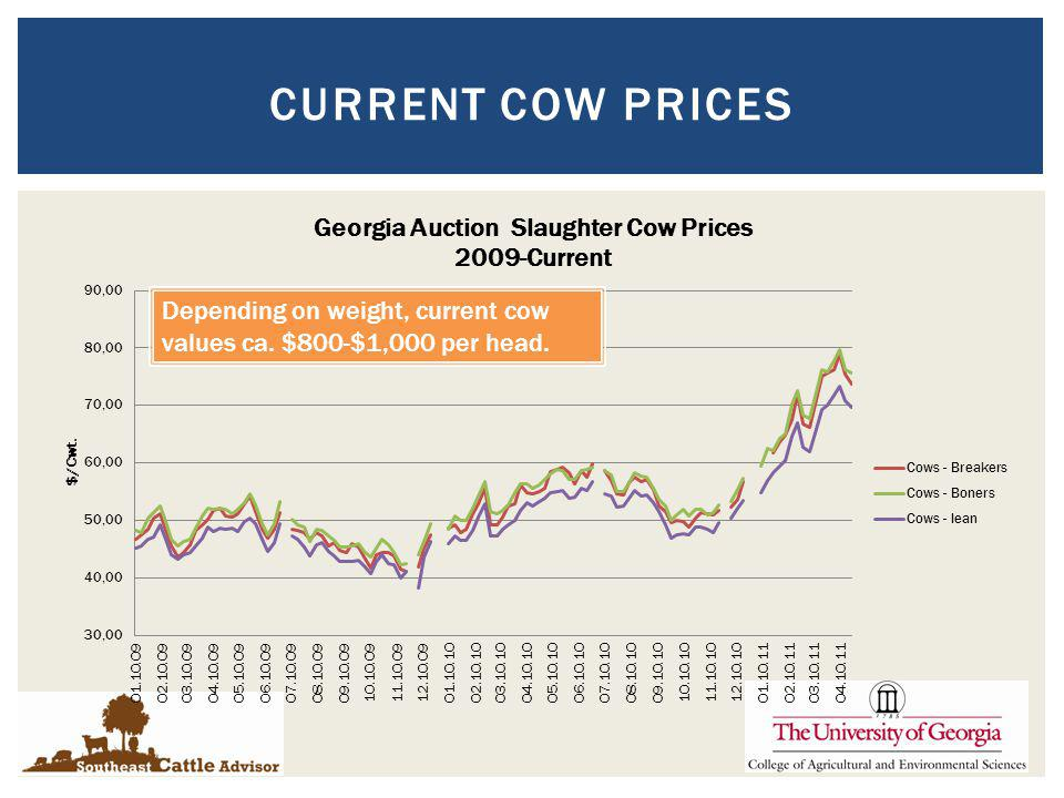 CURRENT COW PRICES Depending on weight, current cow values ca. $800-$1,000 per head.