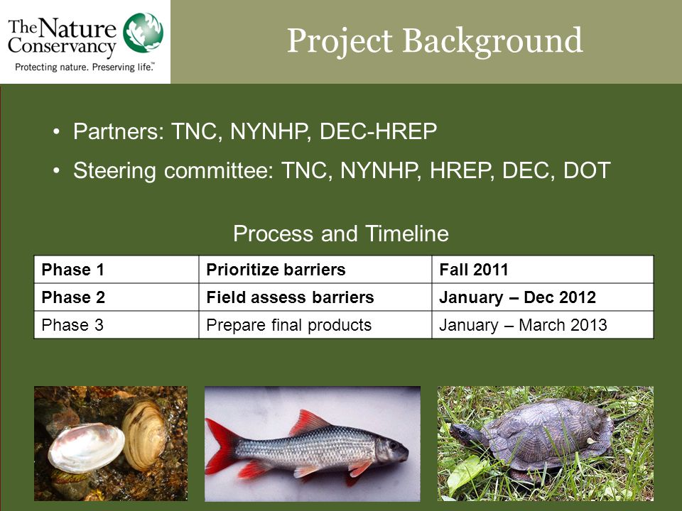 Project Background Partners: TNC, NYNHP, DEC-HREP Steering committee: TNC, NYNHP, HREP, DEC, DOT Phase 1Prioritize barriersFall 2011 Phase 2Field assess barriersJanuary – Dec 2012 Phase 3Prepare final productsJanuary – March 2013 Process and Timeline