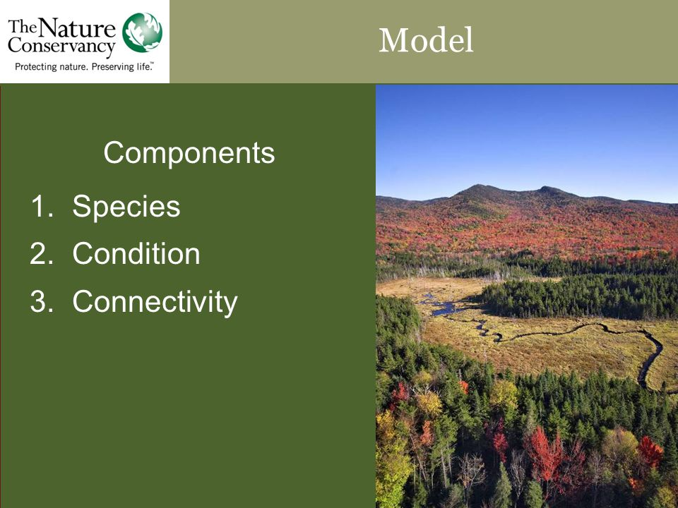 Model Components 1. Species 2. Condition 3. Connectivity