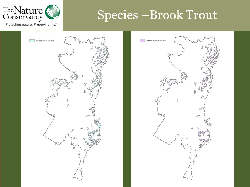 Species –Brook Trout