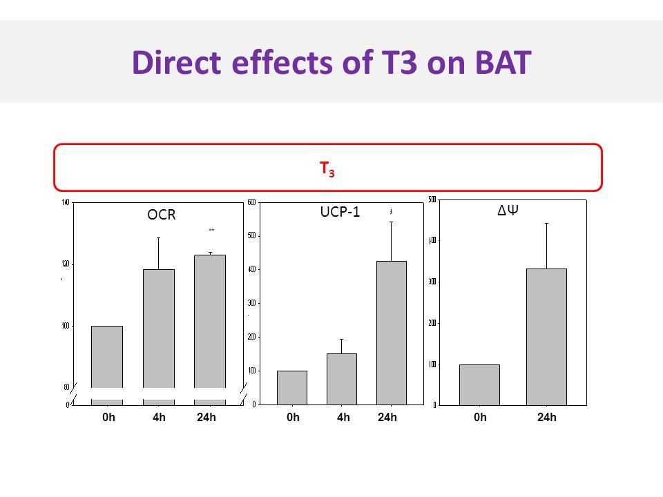 Direct effects of T3 on BAT 0h 4h 24h UCP-1 ΔΨ 0h 24h T3T3 OCR 0h 4h 24h **