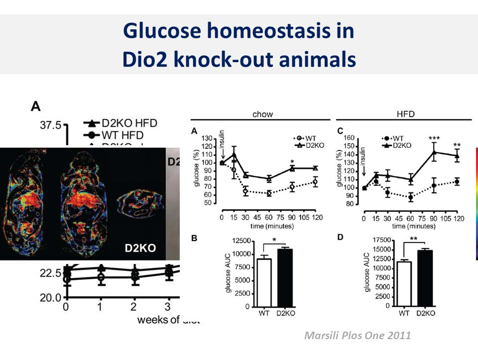 Glucose homeostasis in Dio2 knock-out animals Marsili Plos One 2011