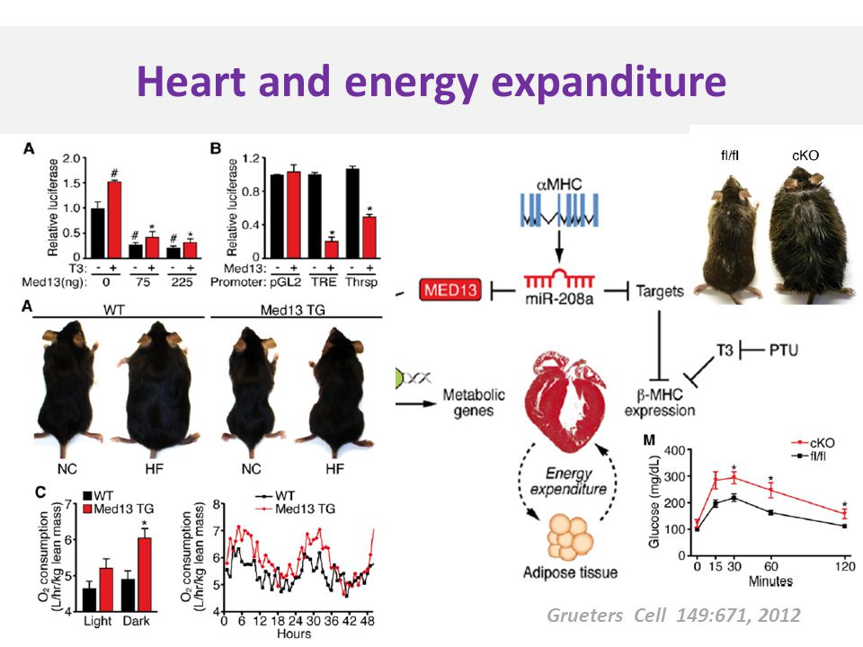 Grueters Cell 149:671, 2012 Heart and energy expanditure
