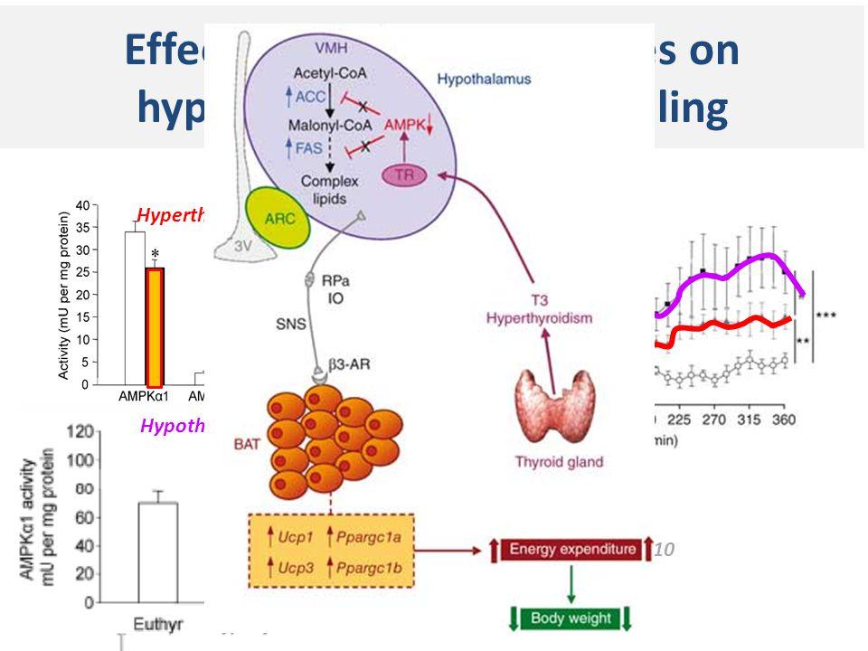 Effects of thyroid hormones on hypothalamic AMPK signaling Lopez Nat Med 2010 Hyperthyroid Hypothyroid