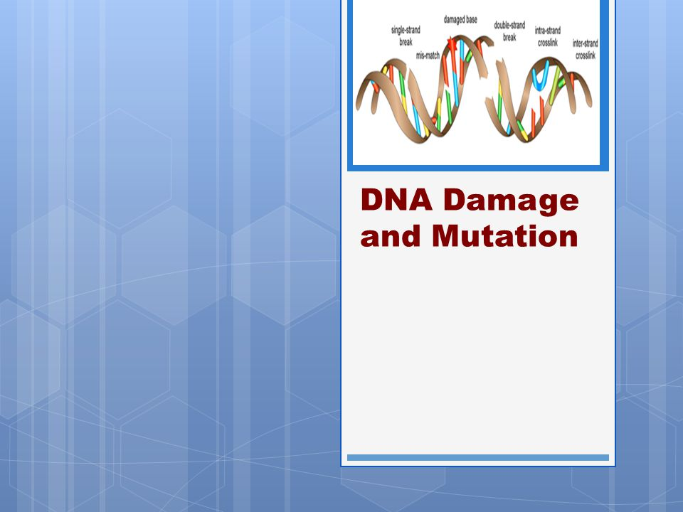 DNA Damage and Mutation