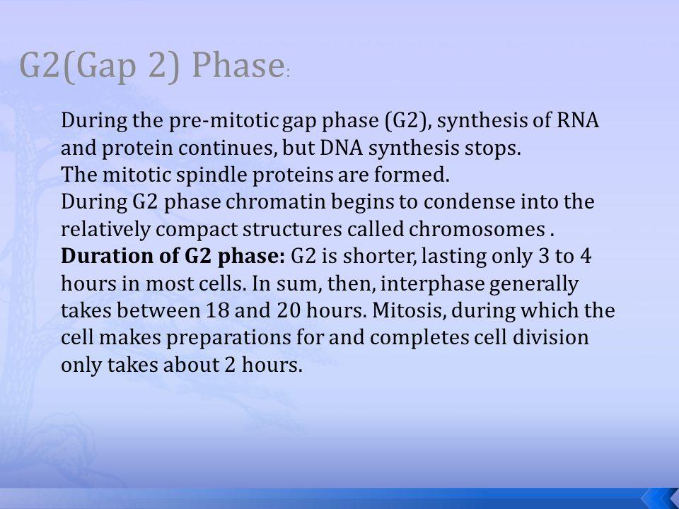 G2(Gap 2) Phase :
