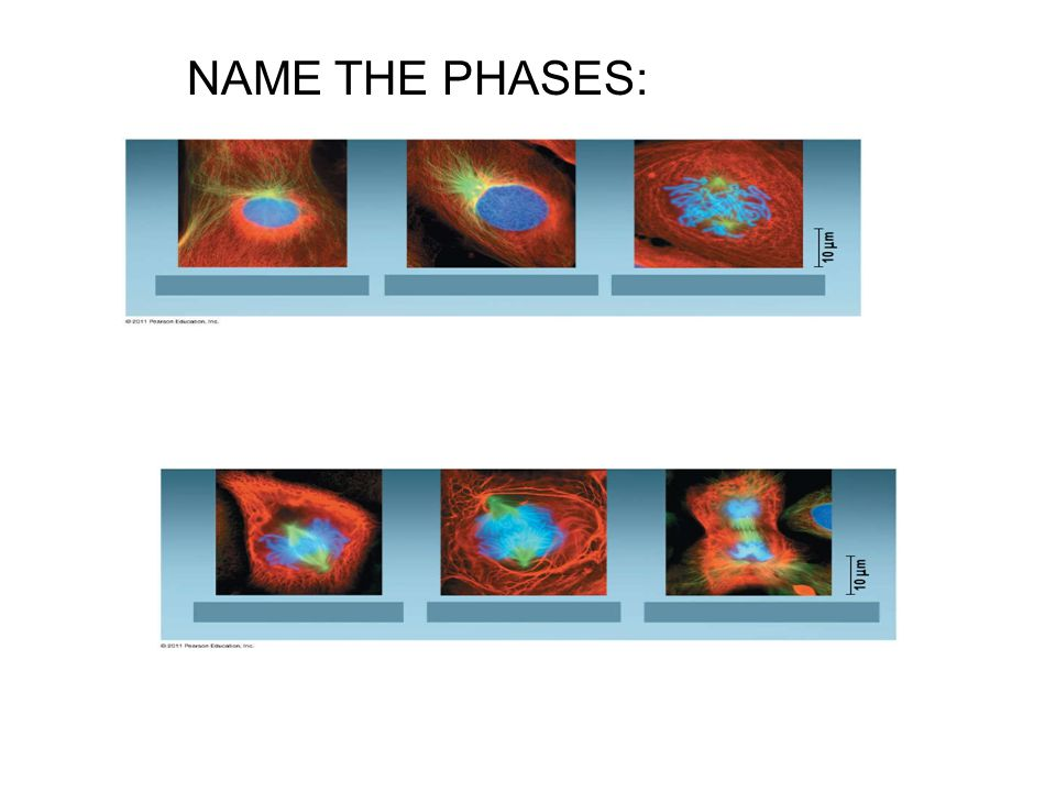 NAME THE PHASES: