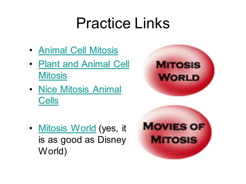 Practice Links Animal Cell Mitosis Plant and Animal Cell MitosisPlant and Animal Cell Mitosis Nice Mitosis Animal CellsNice Mitosis Animal Cells Mitosis World (yes, it is as good as Disney World)Mitosis World