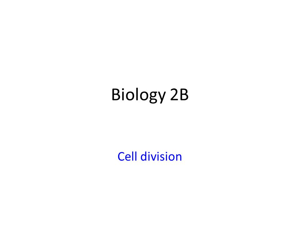 Biology 2B Cell division