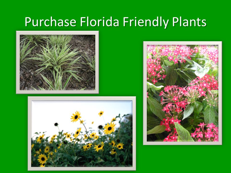 Purchase Florida Friendly Plants