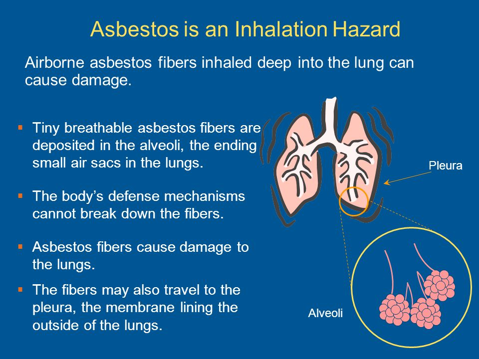 Asbestos is an Inhalation Hazard Tiny breathable asbestos fibers are deposited in the alveoli, the ending small air sacs in the lungs. The bodys defen