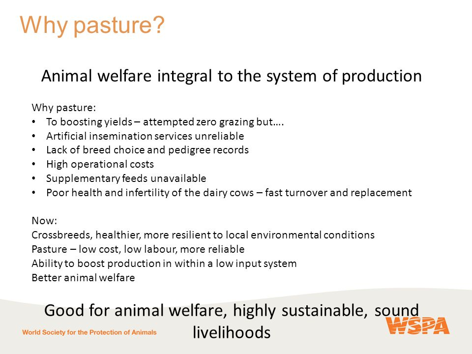 Animal welfare integral to the system of production Why pasture: To boosting yields – attempted zero grazing but….