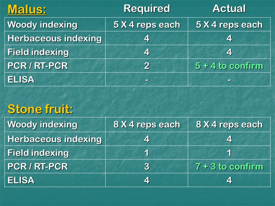 Malus:RequiredActual Woody indexing 5 X 4 reps each Herbaceous indexing 44 Field indexing 44 PCR / RT-PCR to confirm ELISA-- Stone fruit: Woody indexing 8 X 4 reps each Herbaceous indexing 44 Field indexing 11 PCR / RT-PCR to confirm ELISA44
