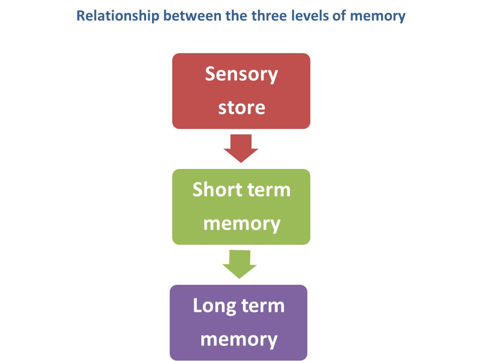 Relationship between the three levels of memory Sensory store Short term memory Long term memory Attention, Motivation Stimuli Rehearsal