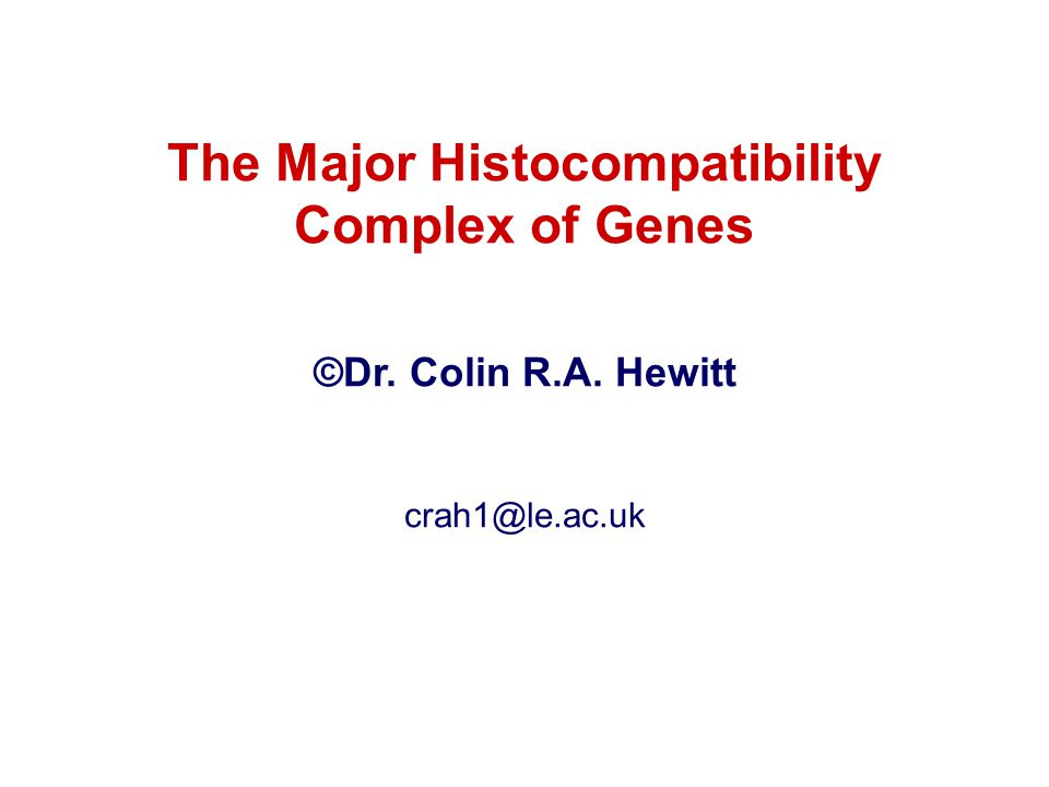 The Major Histocompatibility Complex of Genes ©Dr. Colin R.A. Hewitt crah1@le.ac.uk