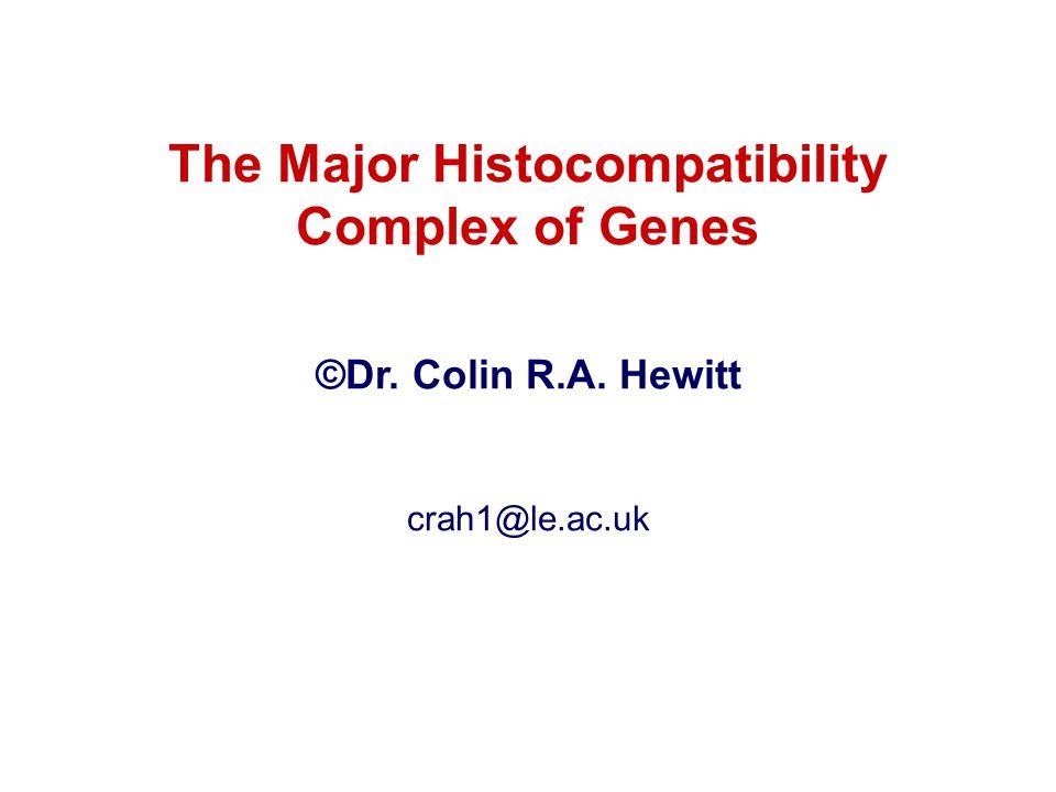 MHC class I accommodate peptides of 8-10 amino acids Cleft geometry MHC class II accommodate peptides of >13 amino acids -M -chain Peptide -chain Peptide