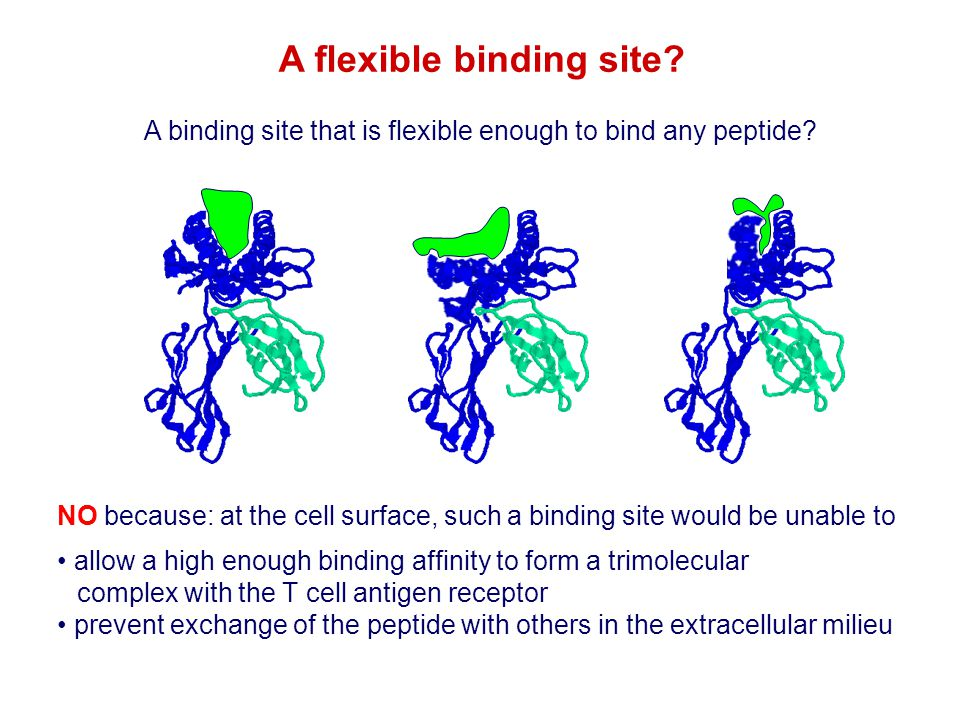A flexible binding site? NO because: at the cell surface, such a binding site would be unable to allow a high enough binding affinity to form a trimol