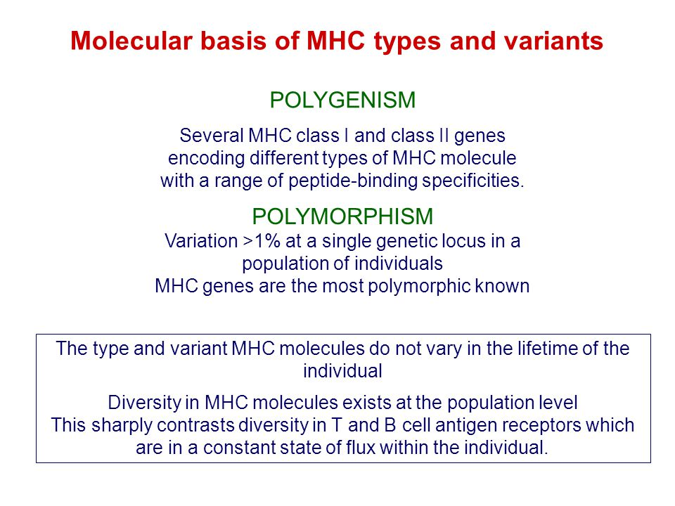 Molecular basis of MHC types and variants POLYMORPHISM Variation >1% at a single genetic locus in a population of individuals MHC genes are the most p