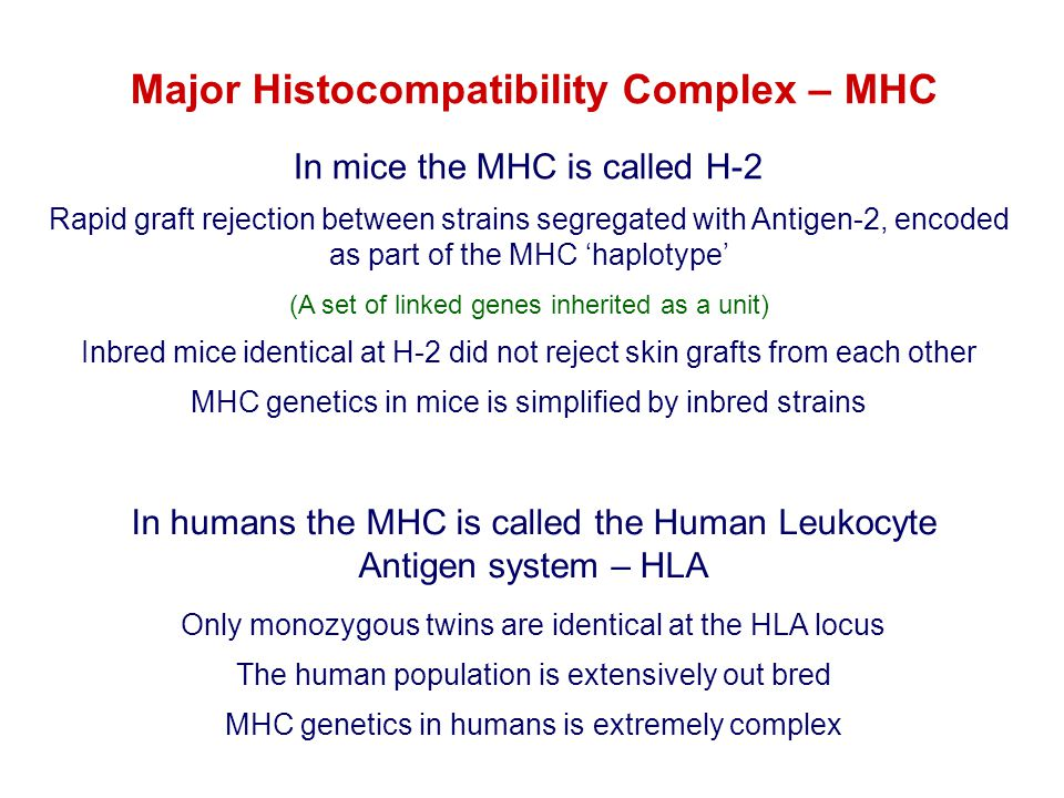Major Histocompatibility Complex – MHC In humans the MHC is called the Human Leukocyte Antigen system – HLA Only monozygous twins are identical at the