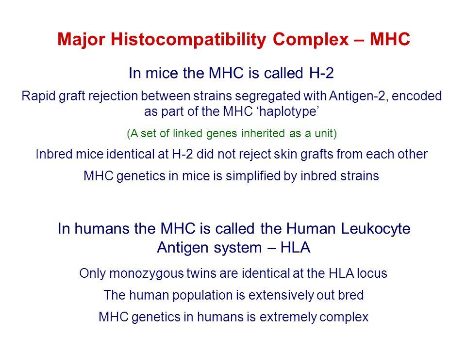 YRYRYRYR XY XXXX R XY R YX R YY R YYXRXRXRXR XRYRXRYR From 2 MHC types and 2 variants…….