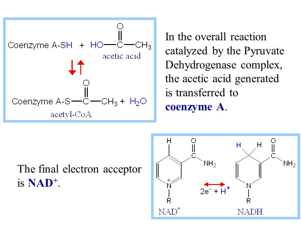 The final electron acceptor is NAD +. In the overall reaction catalyzed by the Pyruvate Dehydrogenase complex, the acetic acid generated is transferre