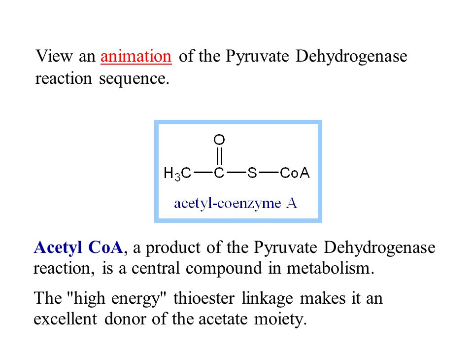 Acetyl CoA, a product of the Pyruvate Dehydrogenase reaction, is a central compound in metabolism. The