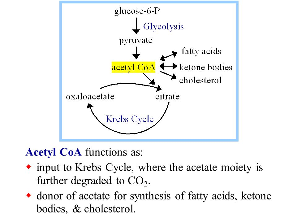 Acetyl CoA functions as: input to Krebs Cycle, where the acetate moiety is further degraded to CO 2. donor of acetate for synthesis of fatty acids, ke
