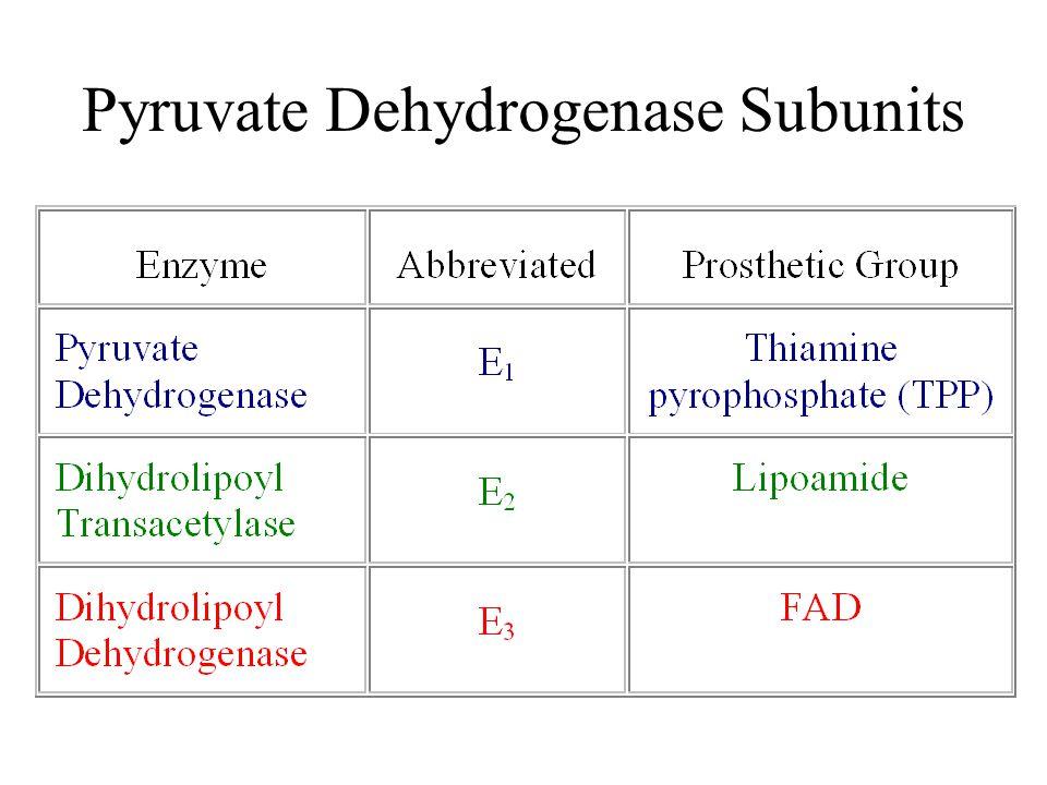 Pyruvate Dehydrogenase Subunits