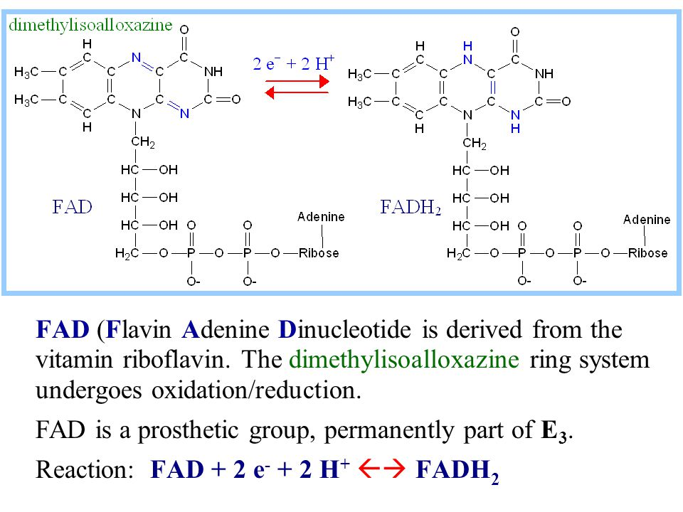 FAD (Flavin Adenine Dinucleotide is derived from the vitamin riboflavin. The dimethylisoalloxazine ring system undergoes oxidation/reduction. FAD is a
